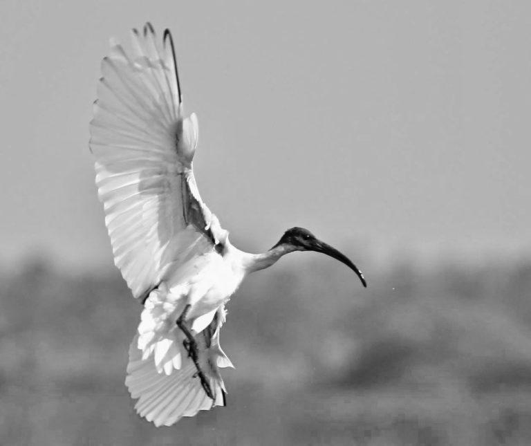 Avian and Reptile Rehabilitation Centre – Avian and Reptile