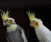Exotic and Pet Birds